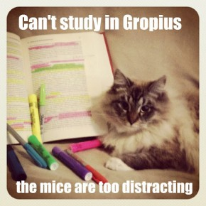 Can't Study in Gropius